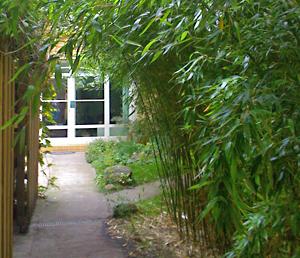 Bambus garten  Bernd Monecke, Die Praxis im Bambusgarten – Berlin Guide Gesundheit