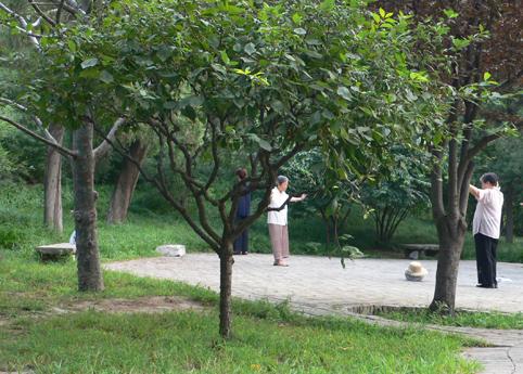 Qi Gong_Kohlehügelpark2 17cm